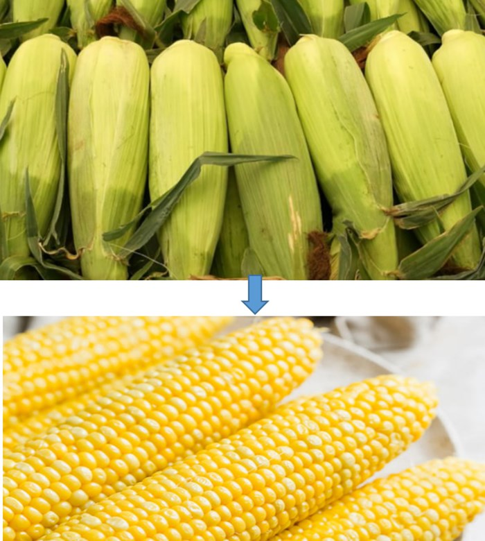 Sweet Corn Bracts Husker Machine Delivery to the U.S.